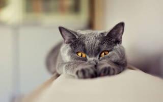 Кот описал диван как избавиться от запаха