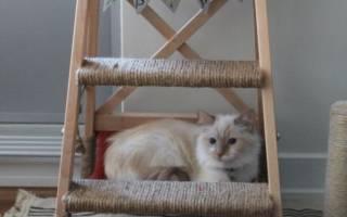 Как сделать гамак для кота