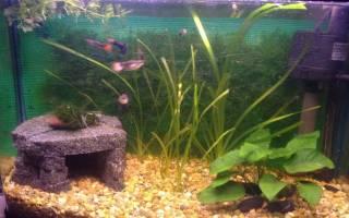 Как обустроить маленький аквариум