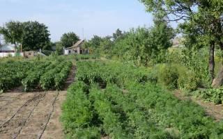 Как разбить сад на участке схема